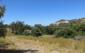 picture of pag302 Large plot with sea views 500m to Agia Galini beach