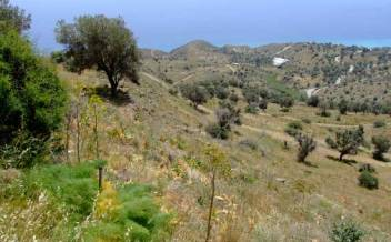 picture of pagi222 Sea facing plot with plan for four bedroom villa near Agios Giorgos