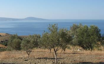 picture of pagi248 Large plot with olive grove and sea view near Agia Galini