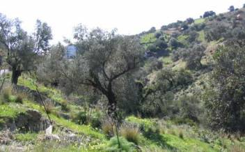 picture of pg86 Plot with distant sea view near to Agia Galini