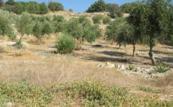 picture of pkam181 Plot with country views and olive trees 1km to Kamilari village