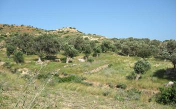 picture of pps187 Gently sloping village plot with sea view in Agia Paraskevi