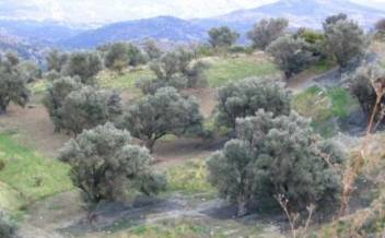picture of prr151 A country plot with mature olive trees and a stream near Agia Galini